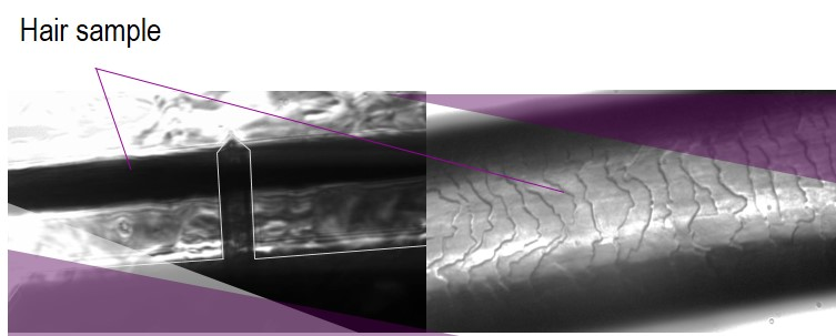 Hair care test - Hair observed with AFM Atomic Force Microscopy and in Macrofluorescence