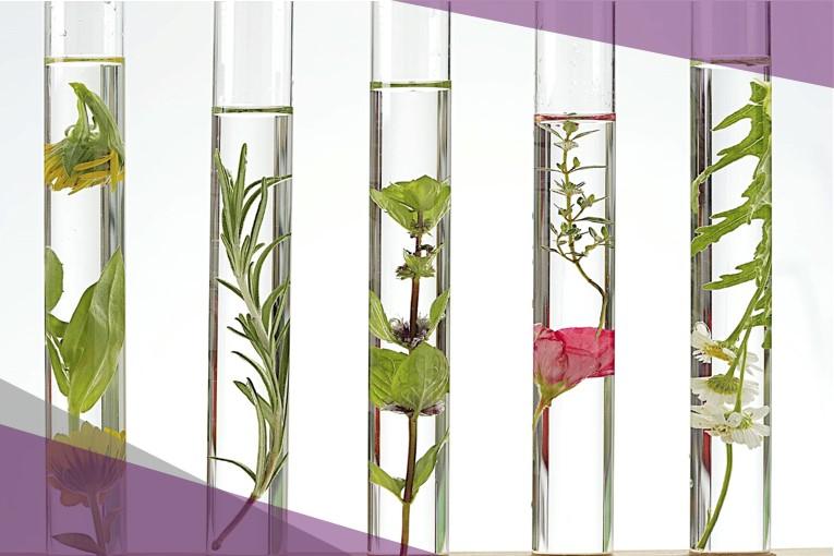 Vegetal extraction