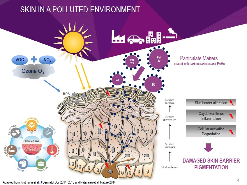 Pollution stress on the skin